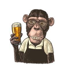 Monkey dressed apron hold beer glass. Vintage color engraving