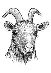 Goat head portrait illustration, drawing, engraving, ink, line art, vector