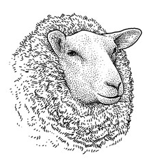 Sheep head portrait illustration, drawing, engraving, ink, line art, vector