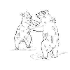 Sketch. Battle of two standing up bears.