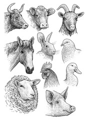 Domestic, farm animals head portrait collection illustration, drawing, engraving, ink, line art, vector