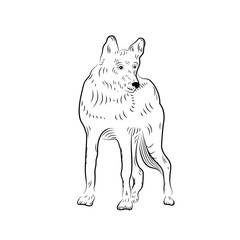 Sketch of looking wolf.