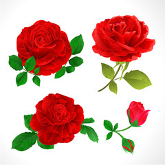 Red roses with buds and leaves vintage  on a white background set two vector illustration editable hand draw