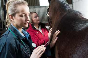 Female Vet Giving Injection To Horse In Stable