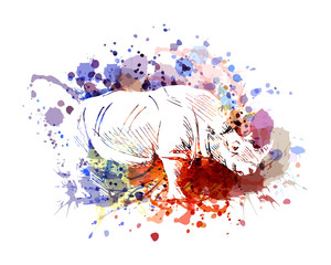 Vector color illustration of rhinoceros