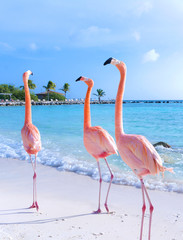 Pink flamingo walking on the beach