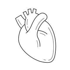 Human heart vector line icon isolated on white background. Medical concept. Human heart line icon for infographic, website or app. Icon designed on a grid system.