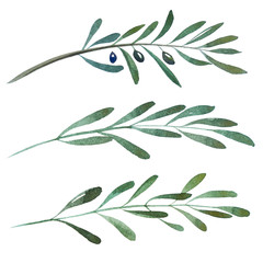 2d hand drawn watercolor graphic elements. Colorful natural illustrations of olive branches and leaves.