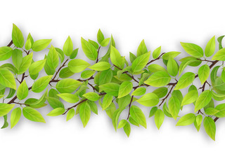 Seamless border from tree branches with green leaves.