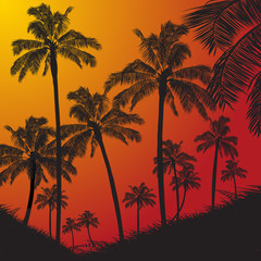 Tropical palm trees silhouette on sunset background