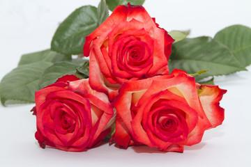 Fiore Rosa Rose con Foglie Red Roses