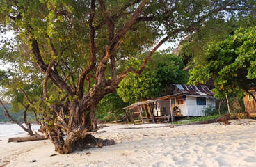 Photo of coastal zone with trees, house