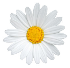 Poster Madeliefjes Beautiful Daisy (Marguerite) isolated on white background, including clipping path.