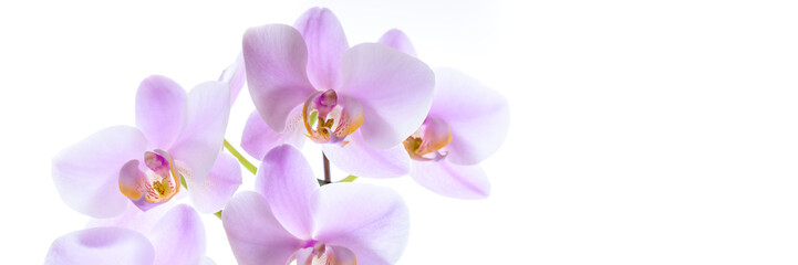 Violette Orchidee isoliert vor weißem Hintergrund