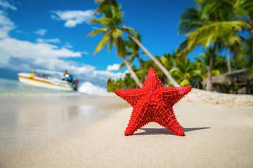 Seastar or sea starfish standing on the island