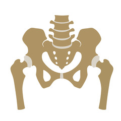 Fragment of the structure of the human skeleton. Pelvic girdle and thighs. Connective cartilaginous tissue. Silhouette. Sign.  Flat design