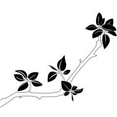Branch illustration. Vector