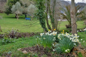 Jolies jonquilles dans un parc en Bretagne