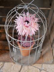 fleur en cage