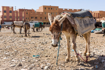 Rissani market in Morocco and the parking of donkeys and mules.