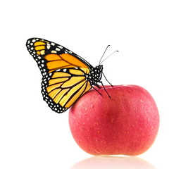 A Monarch Butterfly Lands On A Red Apple