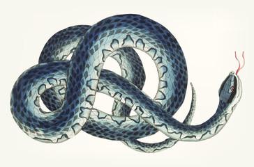 Hand drawn wampum snake
