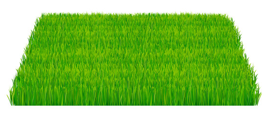 Green fresh grass isolated on white background. Vector illustration which represent part of the lawn isolated on white background.