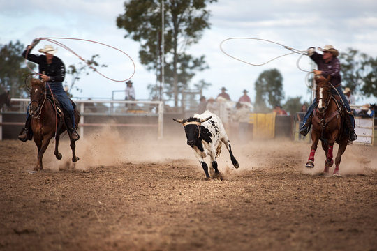 Two Cowboys Roping A Calf At A Rodeo