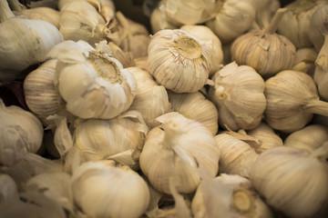 White garlic pile texture. Fresh garlic on market table closeup photo. Pile of white garlic heads. White garlic head heap top view