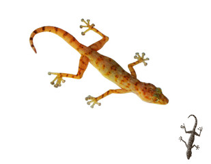 Gecko. Isolated on white background. Vector illustration.