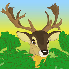 Head of a deer peeking out of green bushes in the forest, cartoon on a natural background