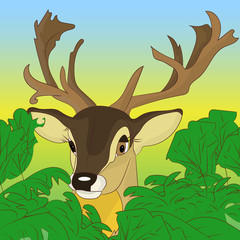 Head of a deer peeking out of green bushes in the forest, cartoon on a natural background,