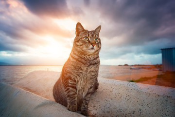 Stray tabby cat standing at sunset with dramatic sky