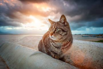 Stray tabby cat at sunset with dramatic sky