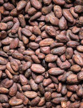 Cocoa beans texture