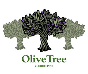 Olive Tree. Extra virgin olive oil symbol. Symbol of culture and Mediterranean food.