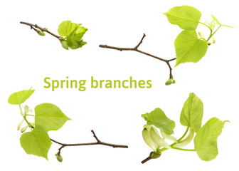 New set of spring linden tree branches photos isolated on white. Spring Easter twigs.