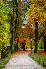 Footpath between colorful autumn trees in Lichtentaler Allee park on the River Oos in Baden-Baden, Germany with red and yellow fall leaves