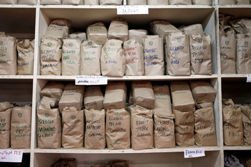 Coffee samples are seen at a laboratory at the Central Kenya Coffee Mill near Nyeri