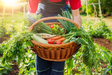 Mixed organic vegetable in wicker basket