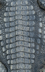 crocodile skin leather background