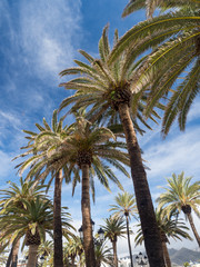 Palm trees along the coast in Nerja at beautiful sunny day. Image of tropical vacation and sunny happiness. Spain
