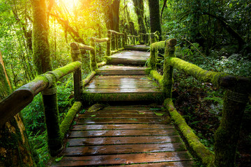 A wooden bridge in the rainforest. Wall mural