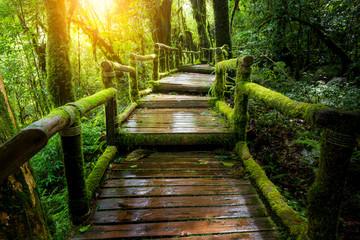 A wooden bridge in the rainforest.
