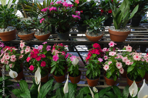 Various Colorful Flowers And Tropical Plants Growing In Garden Center Are For