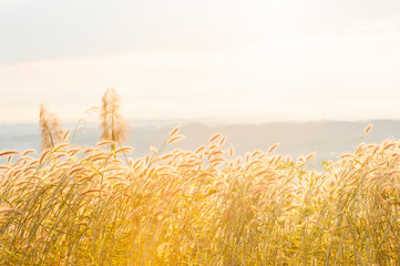 Sunrise shines onto flower field on the mountain.