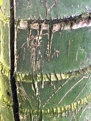 The old bamboo bark texture