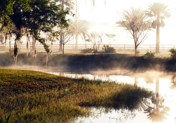 Morning Mist in Central Florida