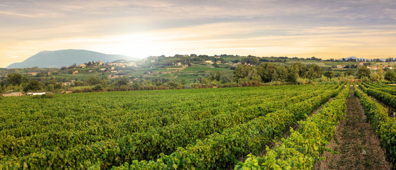Papiers peints Vignoble Vineyards in Provence in the South of France