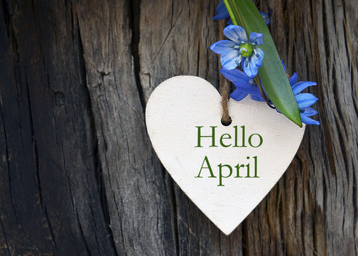 Hello April greeting card with blue first spring flowers on wood background. Springtime concept.Selective focus.